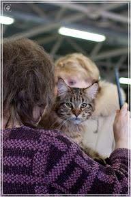 cats-show-24-03-2012-fife-spb-www.coonplanet.ru-011.jpg