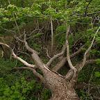 Белогорье - Заповедник лес на Ворскле 063.jpg