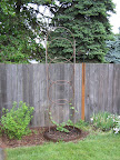 Hop trellis constructed of PVC pipe and irrigation tubing