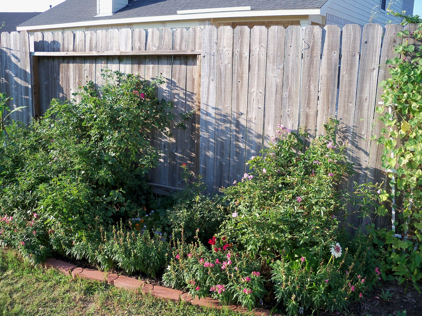 Gardening 2011 - 100_9214.JPG