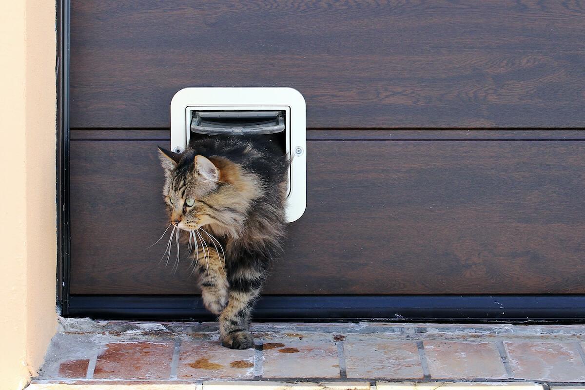 apprenez le langage corporel des chats pour mieux les comprendre et bien vivre avec eux