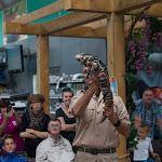 ReptielEnRoofvogelShowBijBolleDierEnTuin2014