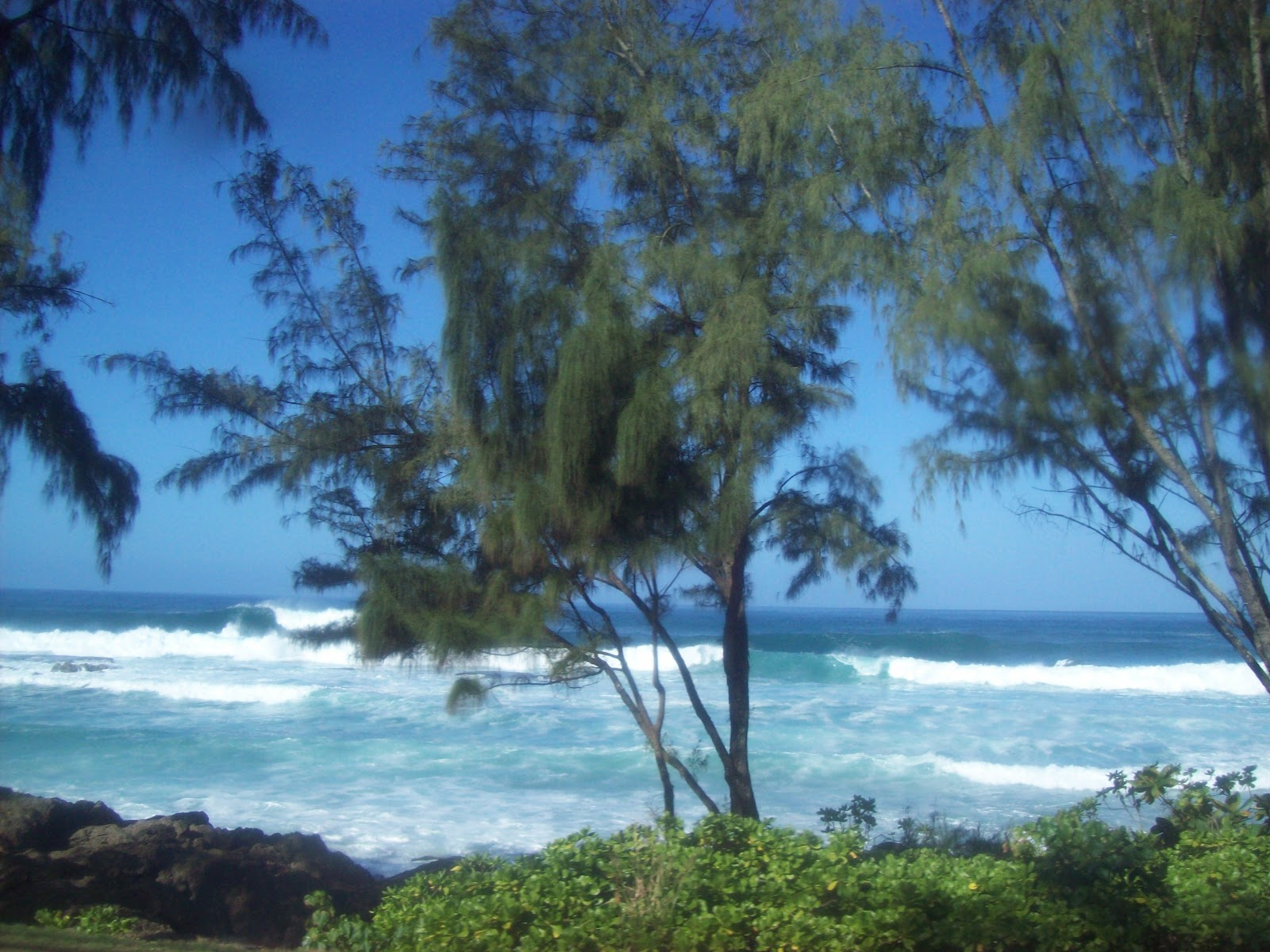Hawaii Day 3 - 100_6973.JPG