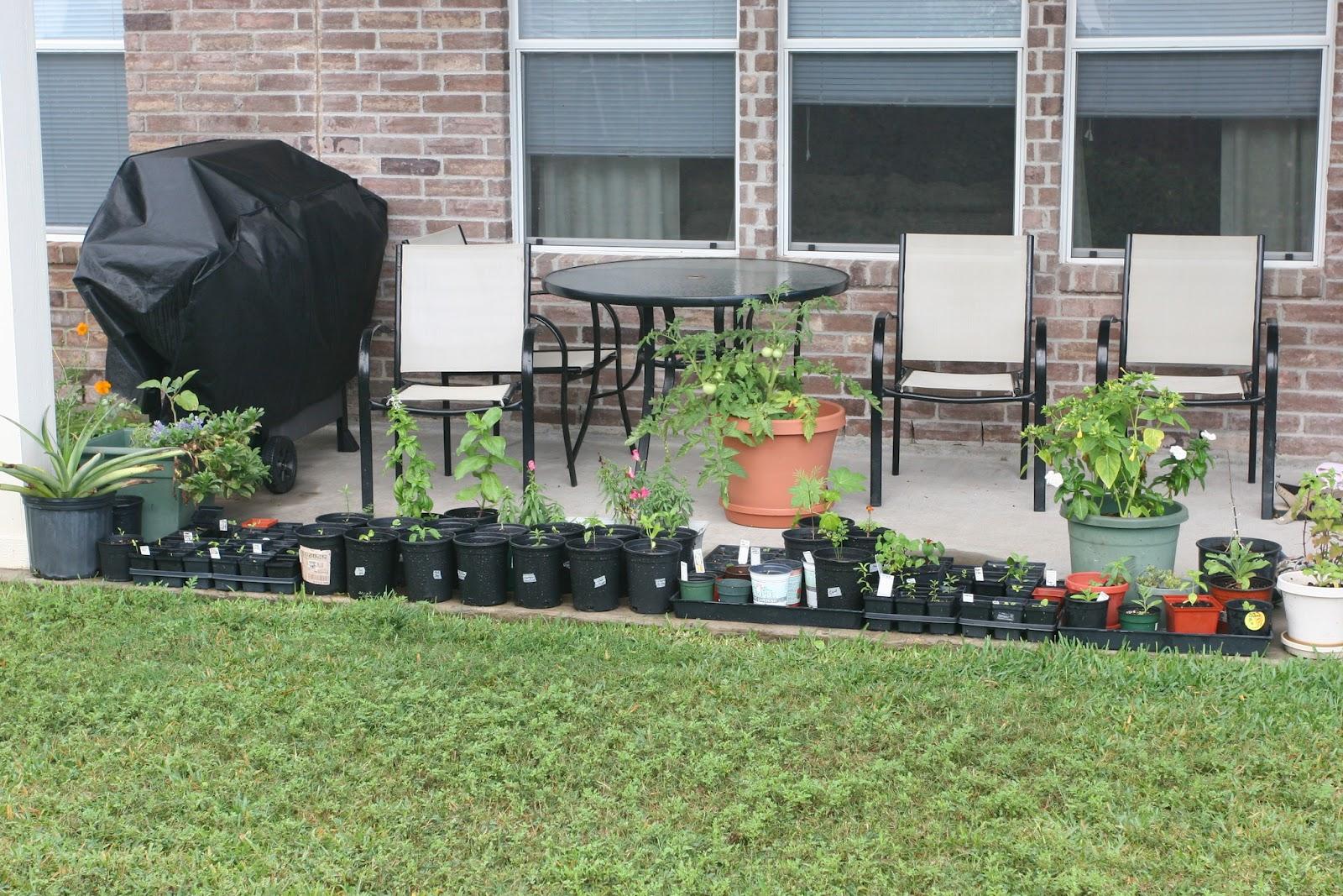 Gardening 2012 - IMG_3540.JPG