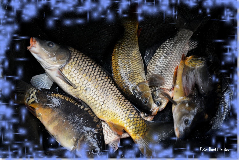 3. ribiško tekmovanje OZVVS GR v ribolovu