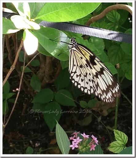 10-22-butterfly5