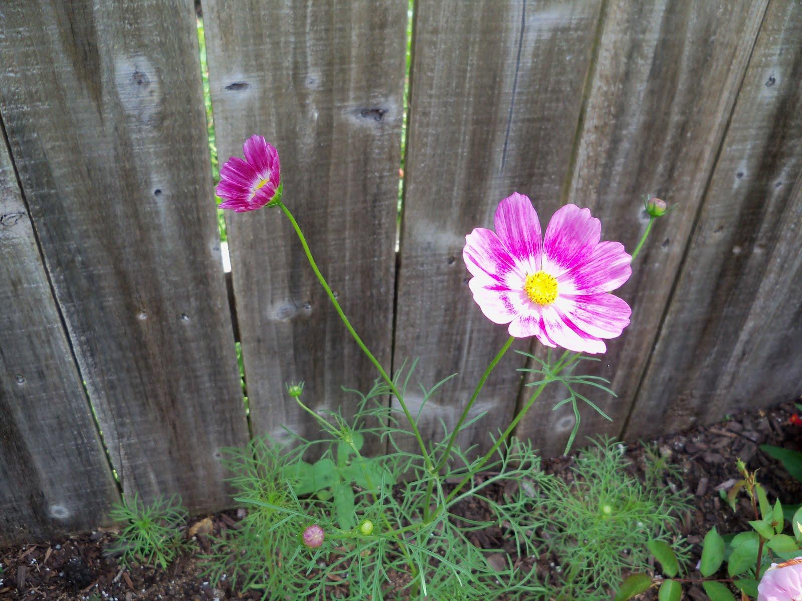 Gardening 2010 - 101_1643.JPG