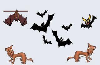 fabula los murciélagos y las comadrejas