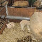 Welpen - Naar de boerderij - IMG_5491.JPG