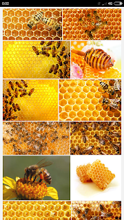 Fakta Lebah madu yang mungkin tidak kau ketahui sebelumnya  Fakta Lebah madu yang mungkin tidak kau ketahui sebelumnya
