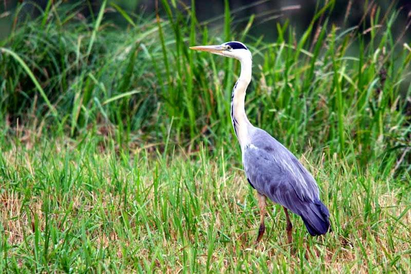 Vogels en dieren - IMG_9168.JPG