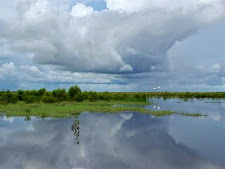 Reflection of a building storm on the wetlands, NT. A Jabiru lands on the water in the distance.