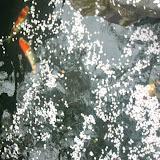 2014 Japan - Dag 5 - marlies-DSCN5540.JPG