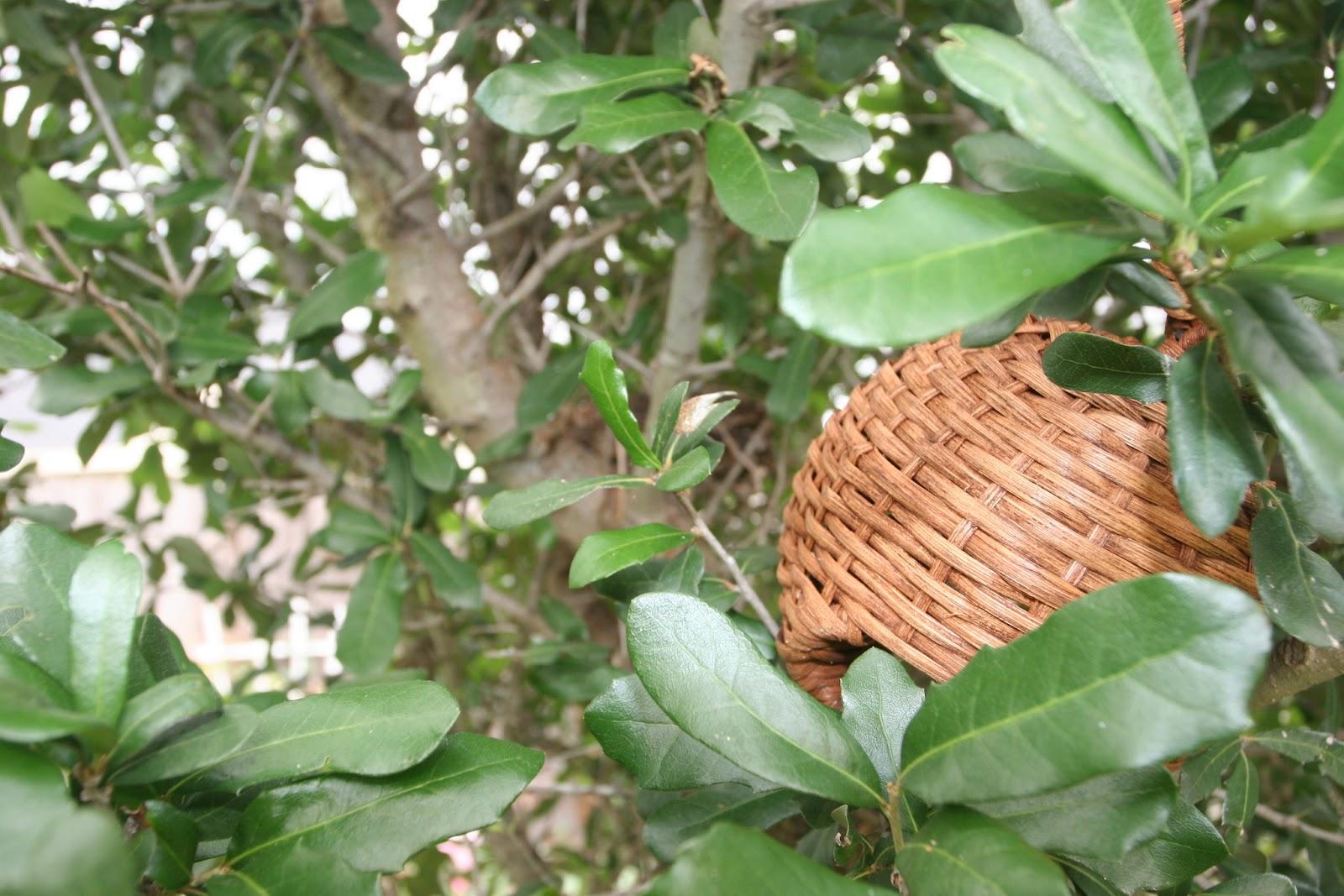 Gardening 2012 - IMG_3269.JPG