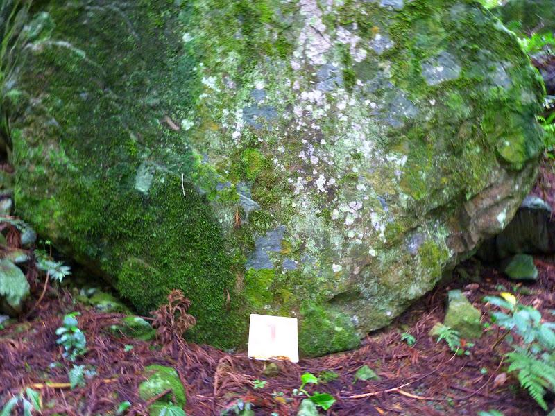 Petite randonnée au sud de Taufen, dans la région de Miaoli - P1330588.JPG