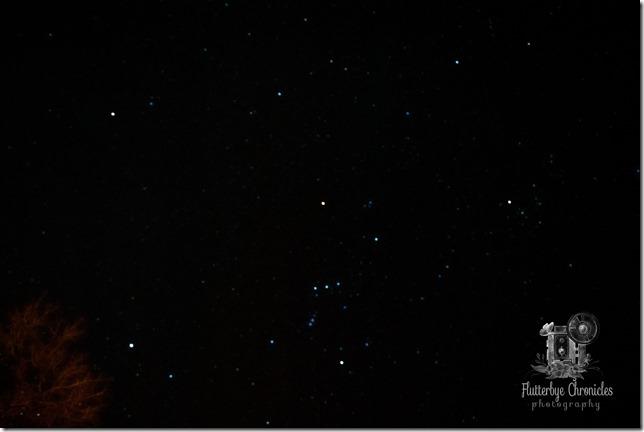 First Stars Image (©Jenny @ Flutterbye Chronicles)