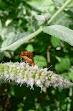 insectos y otros 006.JPG