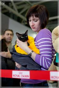 cats-show-24-03-2012-fife-spb-www.coonplanet.ru-085.jpg