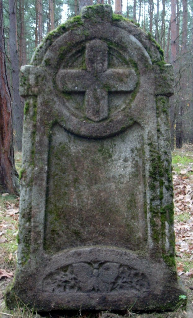motyl/ćma na cmentarzu w Szczecinie-Sławocieszu