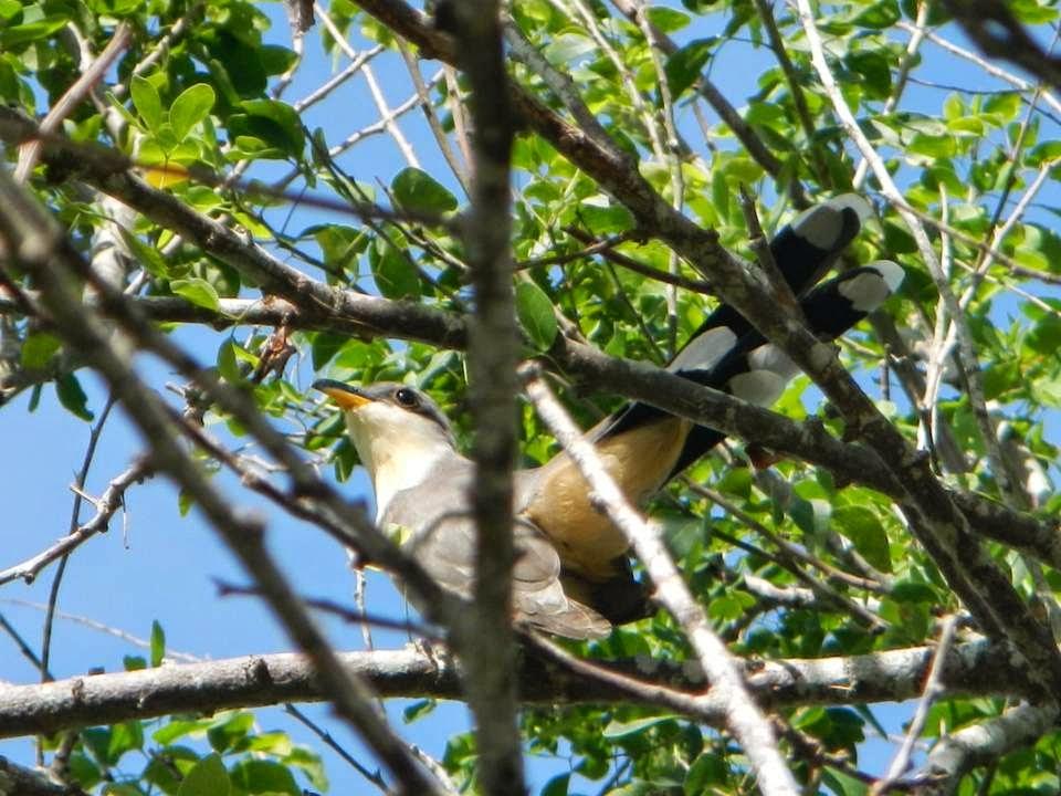 Sobre-aves-y-bosques_observa-escucha-y-cuenta3.jpg