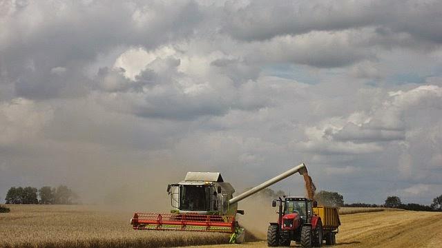 Manor Farm Harvest - August 2008 - pic08.jpg