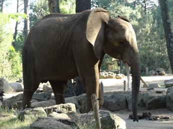2017.06.17-073 éléphant