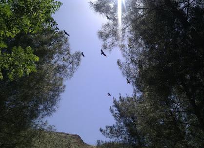 Kelaynak Kuşları - Birecik-2.jpg