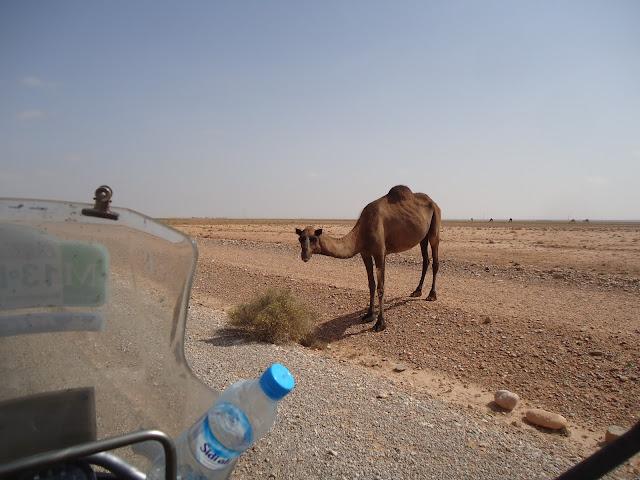 Marrocos 2011 - Página 3 DSC03554
