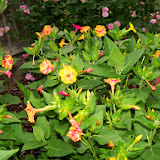 Gardening 2014 - 116_1963.JPG