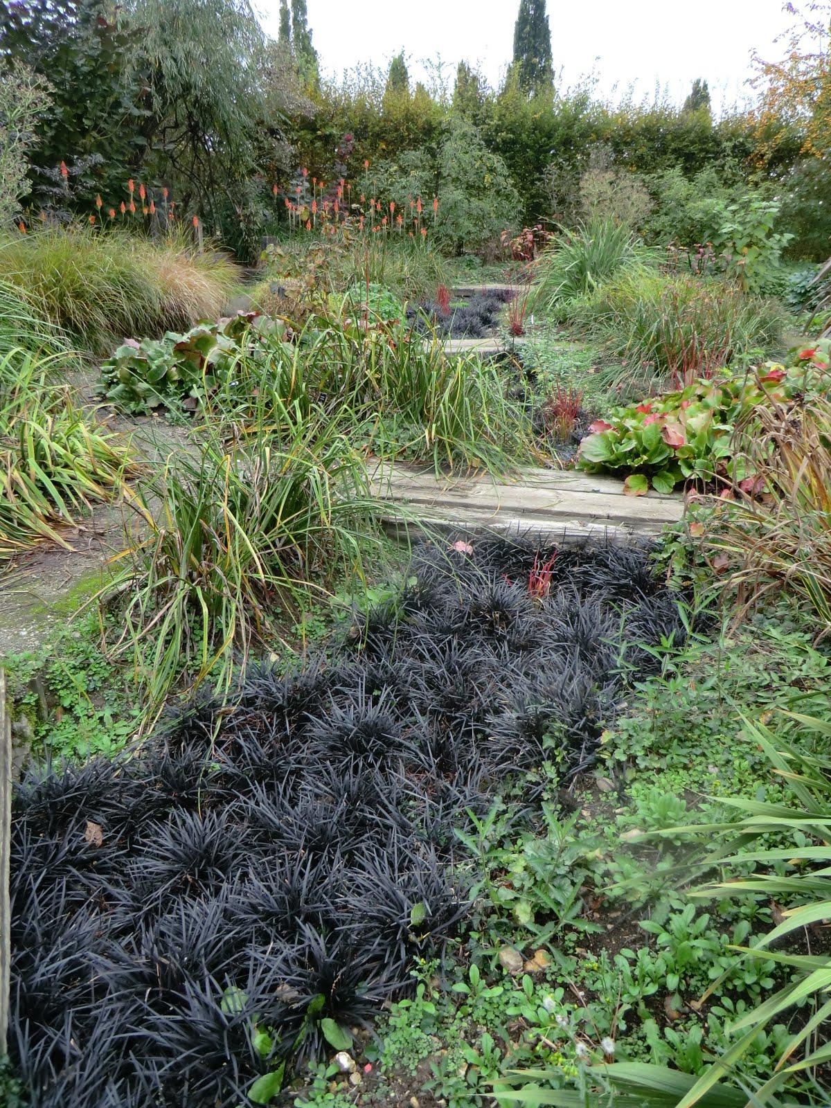 CIMG5178 A black river flowing through the Heaven & Hell Garden
