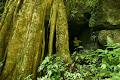 Tree Cave in the Melinau Gorge | photo © Matt Kirby