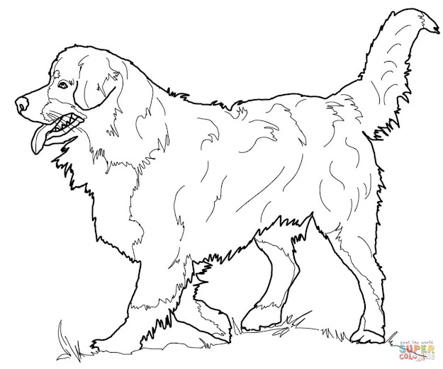 Click The Bernese Mountain Dog Coloring Pages