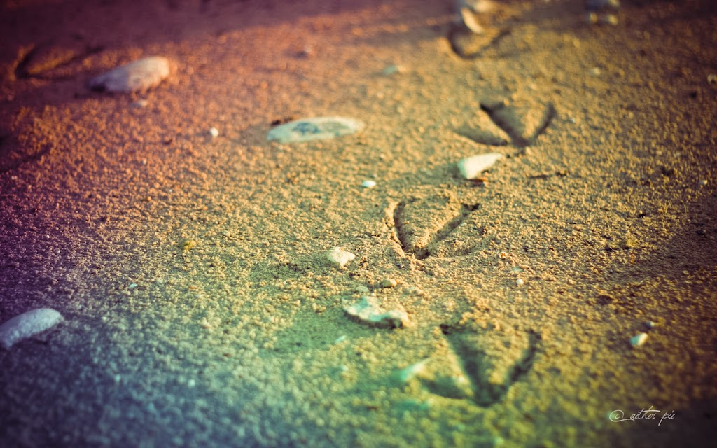 Tracks-wallpaper_byAEtherPie