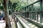 Látogatók az elefántoknál a budapesti állatkertben, 1959 (Fotó: Fortepan)