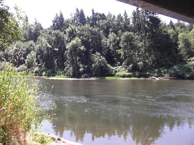 Skookumchuck River 2012 - DSCF1826.JPG