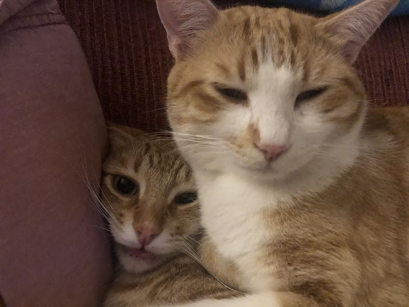 """""""Si sta proprio comodi su di te, fratello!"""" di didi_la"""