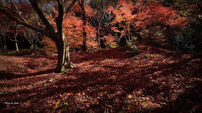 京都嵐山寶筐院