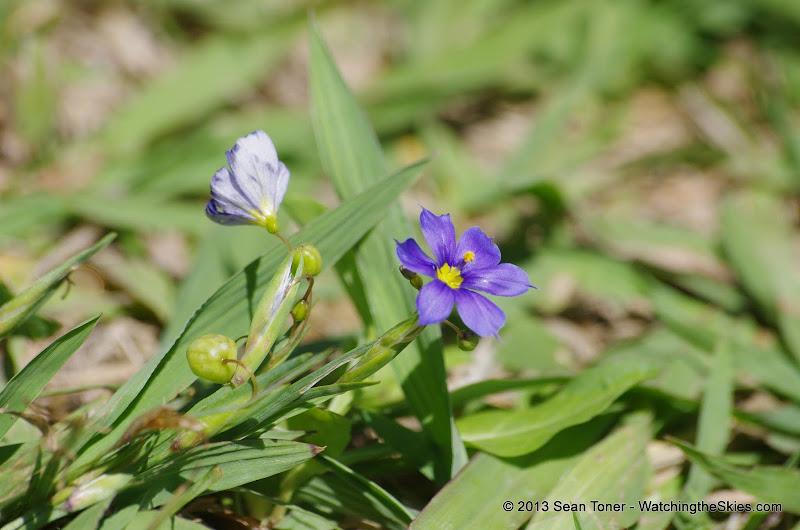 2013 Spring Flora & Fauna - IMGP6412.JPG