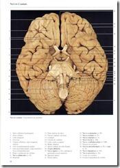 068 Nervos Craniais