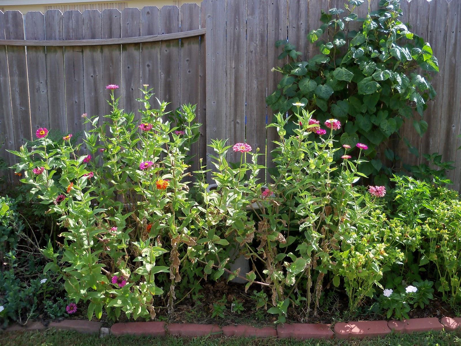 Gardening 2011 - 100_9944.JPG
