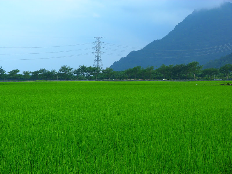 TAIWAN. Weekend Randonnée, Taipei à  Hehuanshan en passant par Puli, retour par les gorges de Taroko - P1290057.JPG