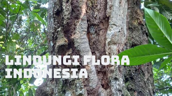 Menjaga flora Indonesia