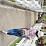 Maria Sibuea's profile photo