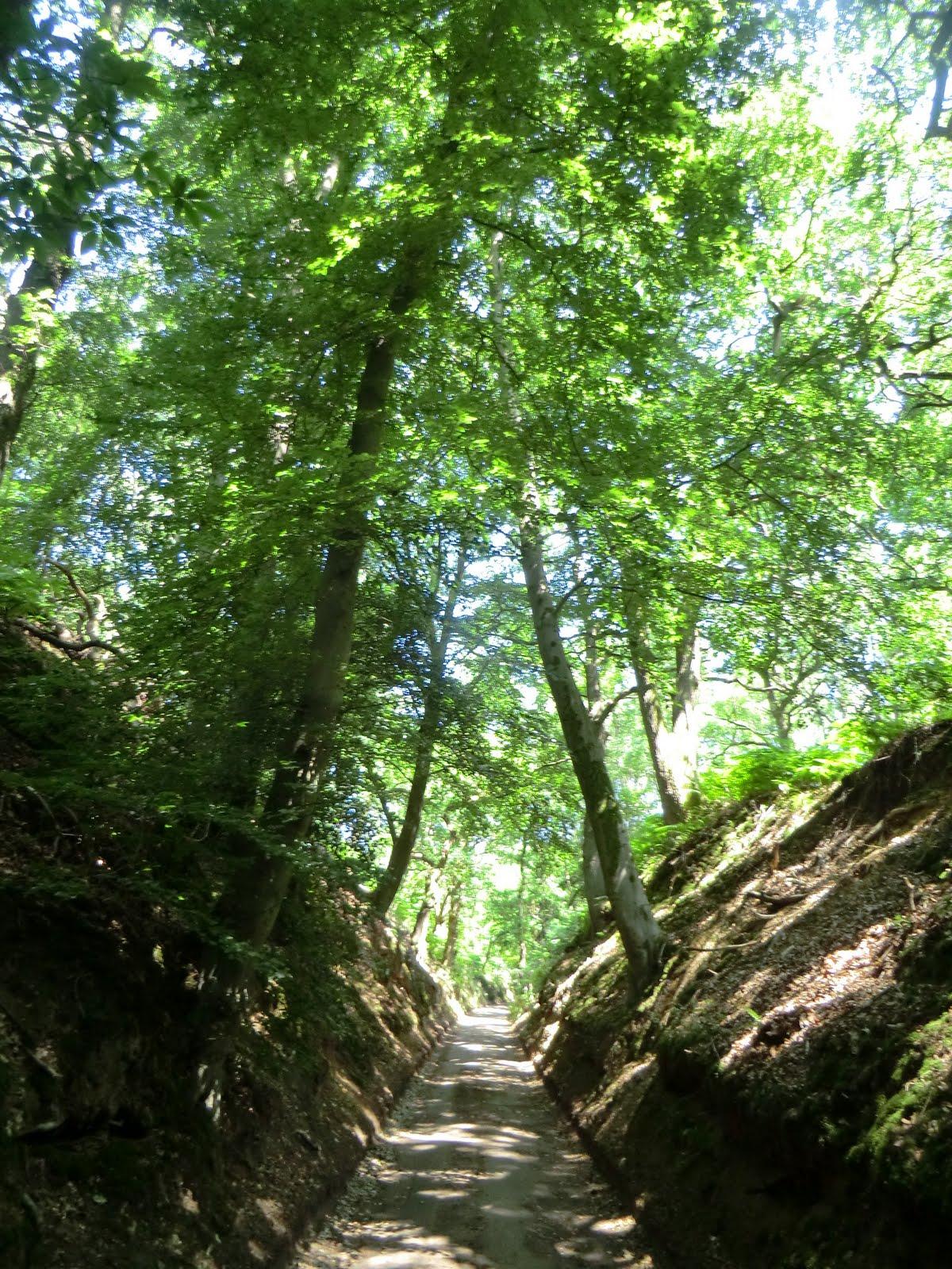 CIMG7596 Sandy Lane in summer