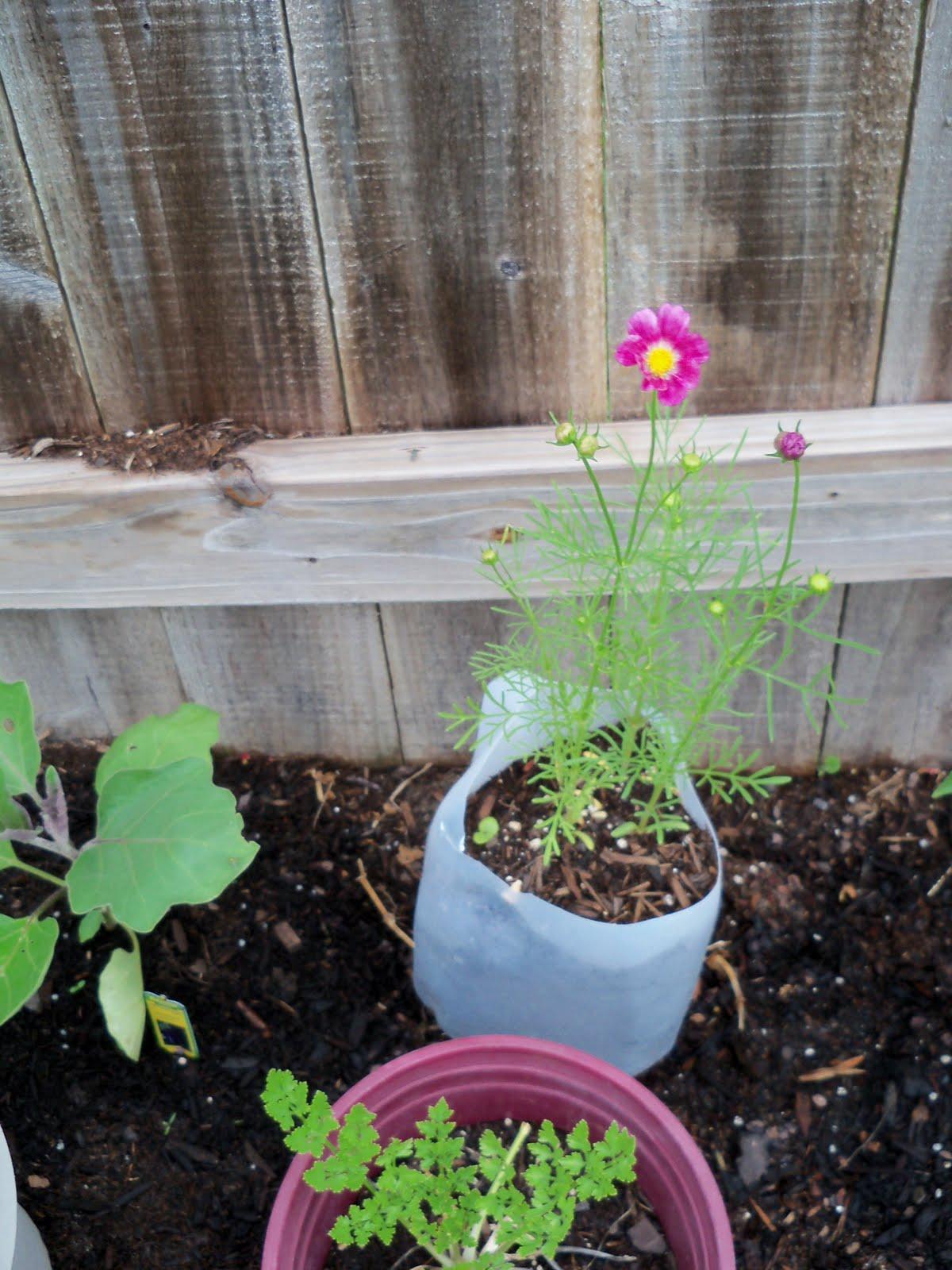 Gardening 2010 - 101_1570.JPG