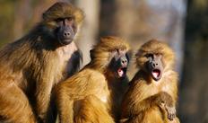 Unos monos