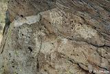 Birthday Canyon petroglyphs.