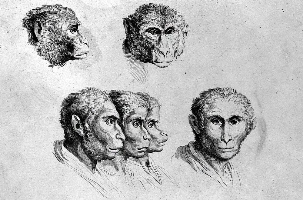 charles-le-brun-physiognomic-heads-6