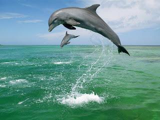 Achtergrond met springende dolfijnen