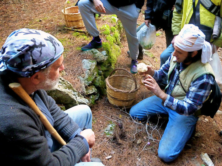 Presenting a group hike with the Hiking Club of Ikaria inside a wooded mountain ravine, looking for mushrooms and learning their names, getting to know their qualities and the big part they play in the eco-system. I am sharing this post because, like many Ikarians, I love mushrooms.